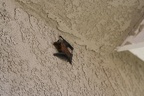 Bat on the House